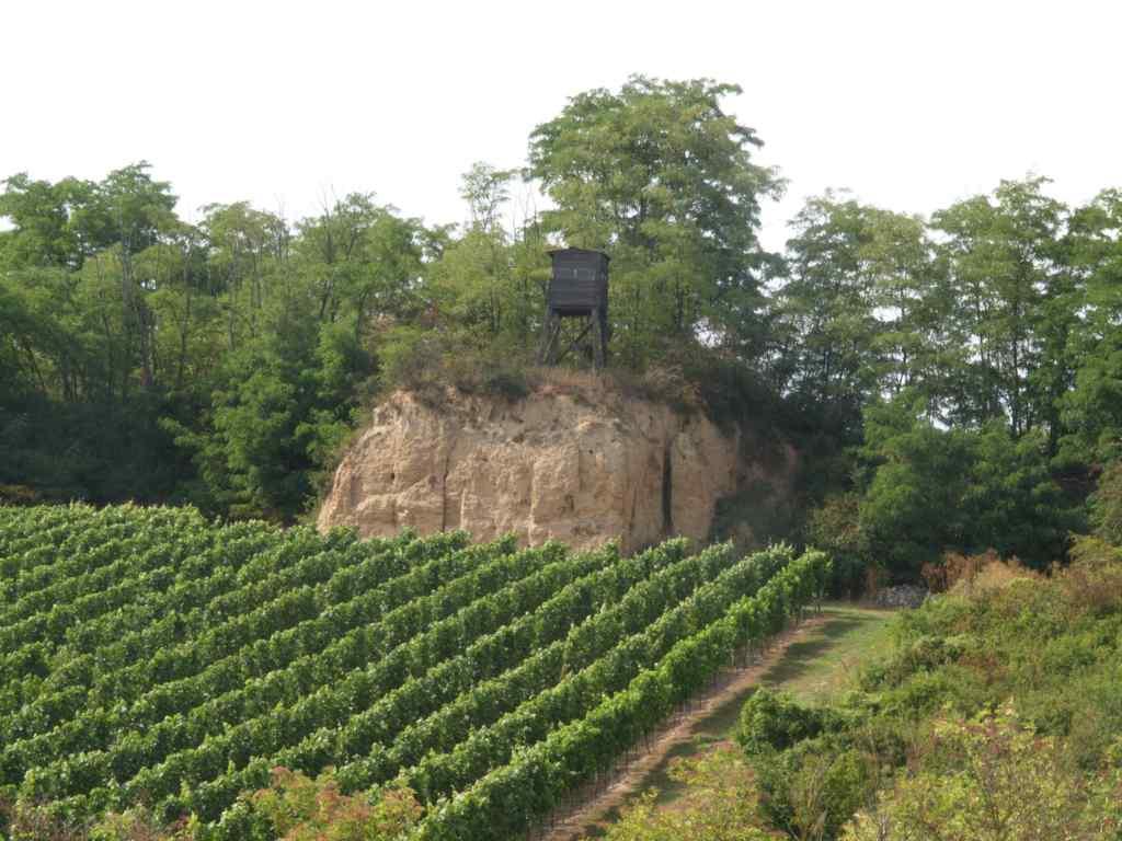 in-der-steinkaut-1.jpg