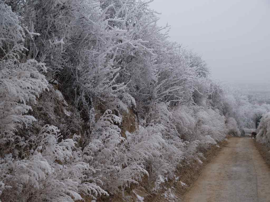 rauhreif-weihnachten-2007-am-elfmorgenrech-1.jpg