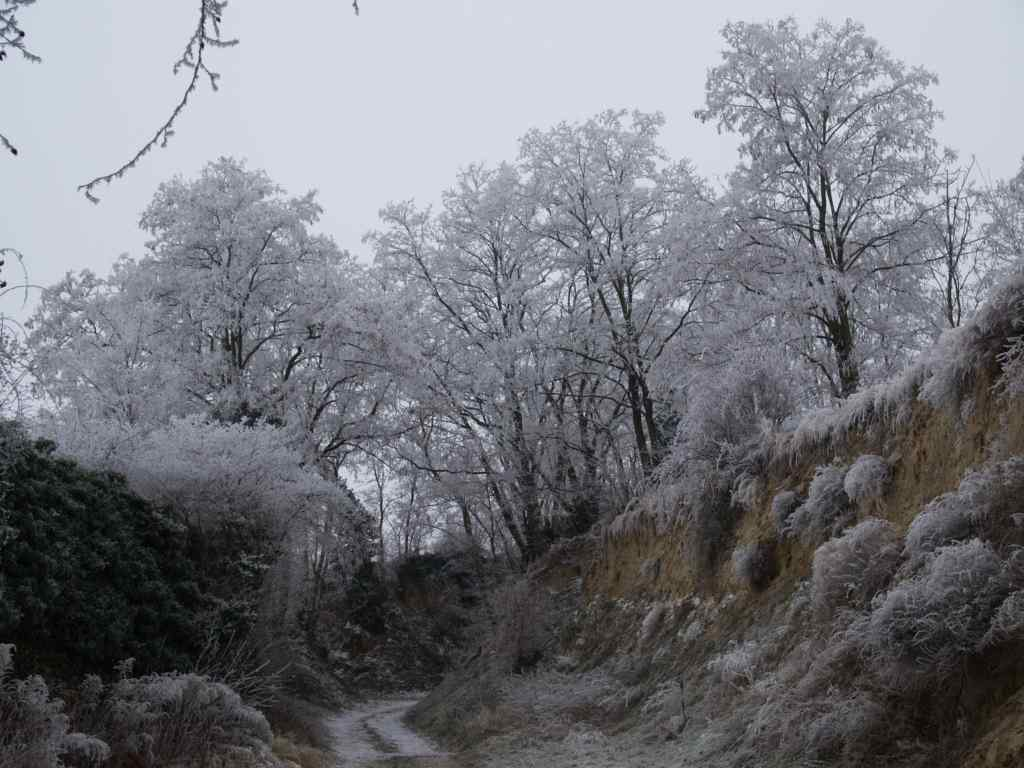 rosenbergshohl-im-rauhreif-1.jpg