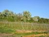 Hangen-Wahlheim Blick in die Gemarkung 6.4.2014 - 2