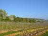 Hangen-Wahlheim Blick in die Gemarkung 6.4.2014 - 3