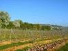 Hangen-Wahlheim Blick in die Gemarkung 6.4.2014 - 6