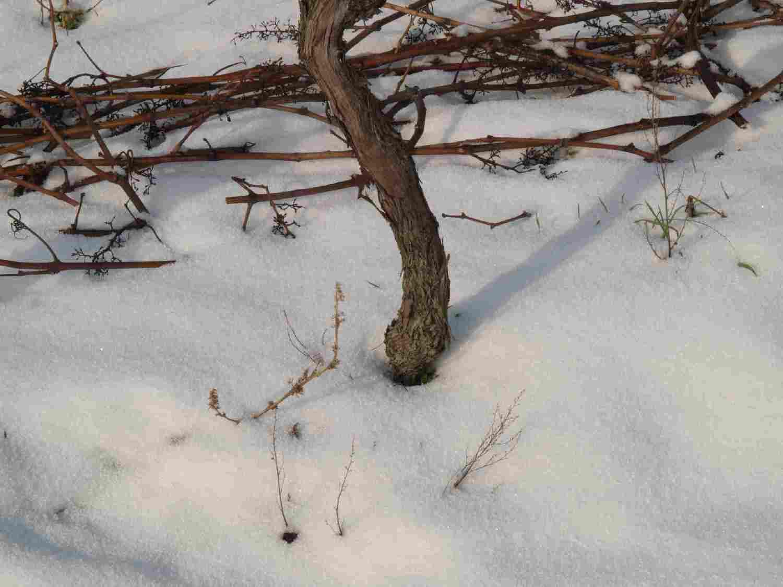 der-stamm-im-schnee