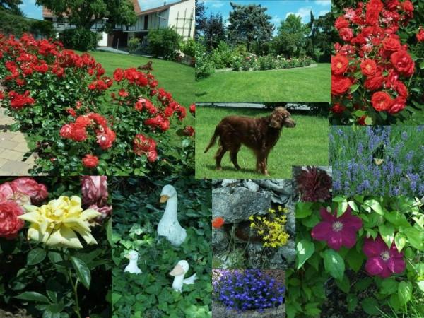Gartenimpressionen am Mittag des 13. Juni 2009